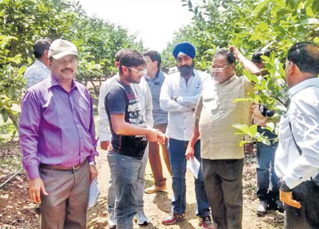 100 tonnes of tomatoes in one acre