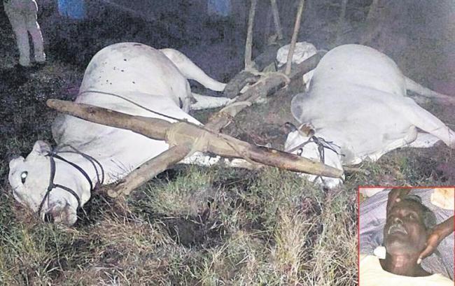 Farmer, oxen deaths with current shock - Sakshi