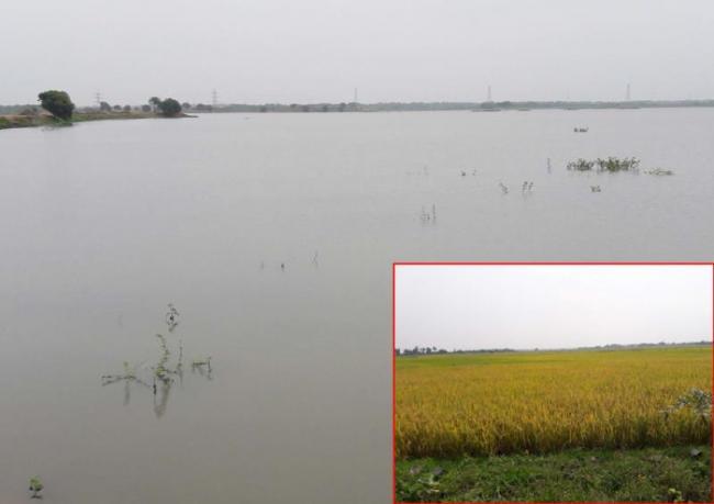 Bala samudram Pond filled with mission kakatiya works - Sakshi