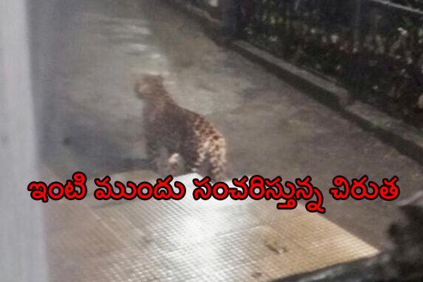 Leopard sighted at Himachal Pradesh Raj Bhavan - Sakshi