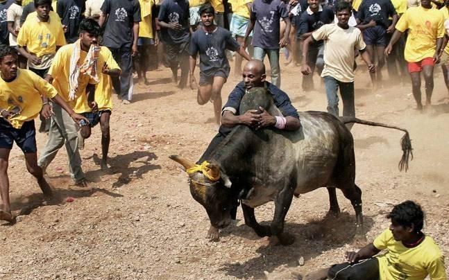 Jallikattu Premier League in Chennai from January 7 - Sakshi