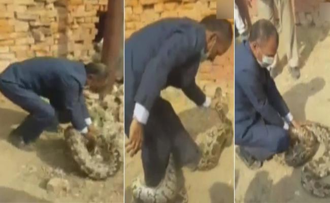 Botany Professor catch python in Allahabad - Sakshi
