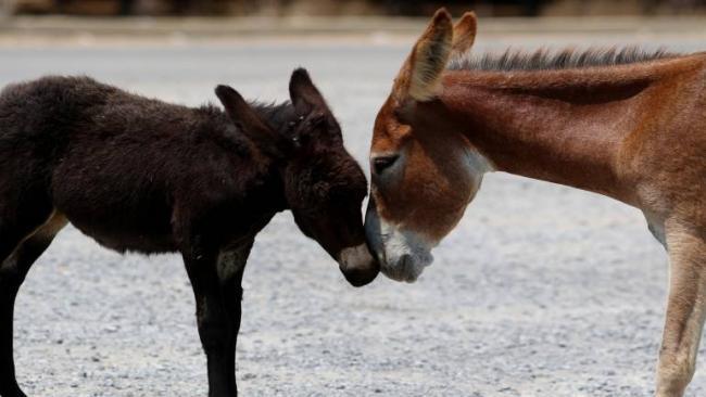 China reduces tax on donkey skins despite population fears - Sakshi