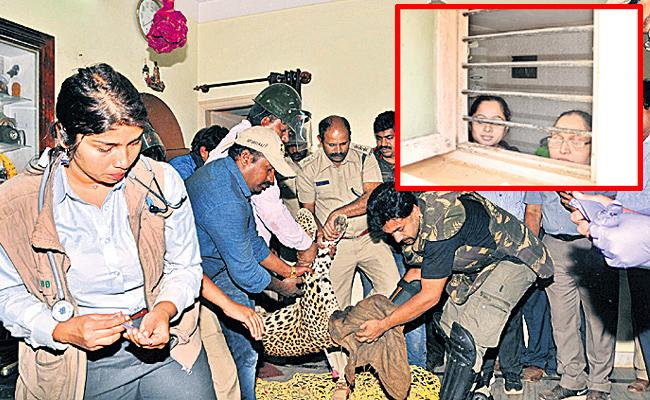 After high drama, leopard captured from house in Tumakuru town - Sakshi