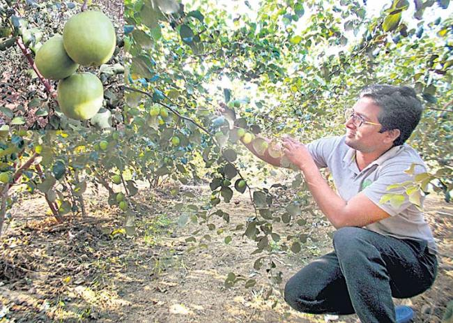 Nature Farming is better than job - Sakshi