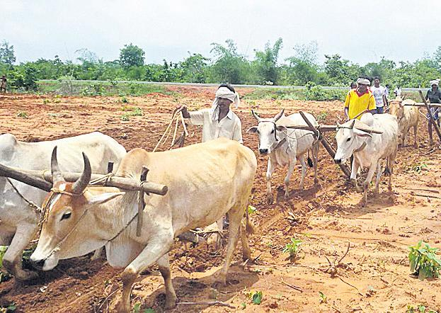 An uncertainty about the long-term agricultural loans - Sakshi