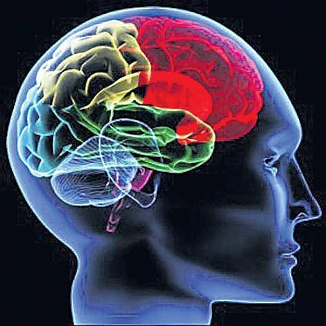 The brain size increased - Sakshi