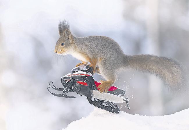 squirrel help to lord rama bridge to sri lanka - Sakshi