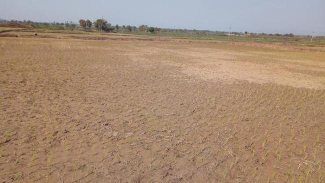 water problems for crops - Sakshi