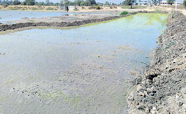 pond land illegally taken in tharoor - Sakshi