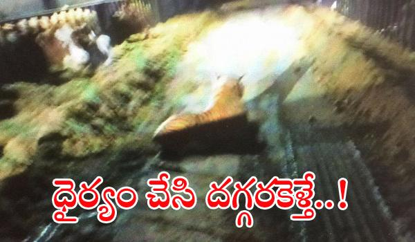 Tiger Toy Made Police Stand off for 45 minutes - Sakshi