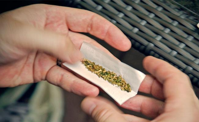 Marijuana supply In Agency Areas - Sakshi
