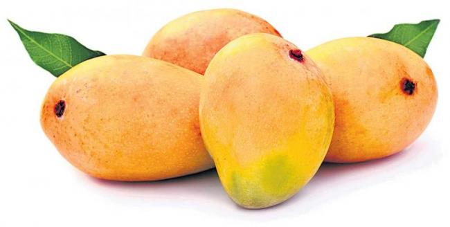 Mango fruits  Health benefits - Sakshi