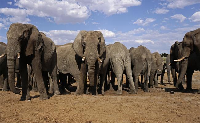 People Suffering With Elephants Attacks In Srikakulam - Sakshi