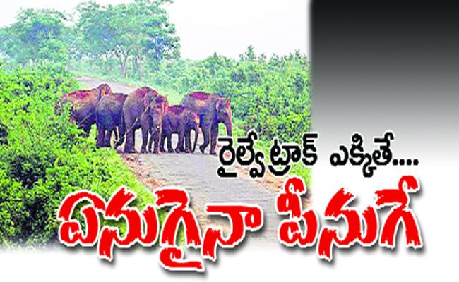 Elephants Are Killed In Rail Accidents - Sakshi