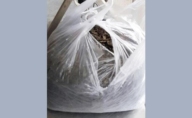 Marijuana Packets In School Bags - Sakshi