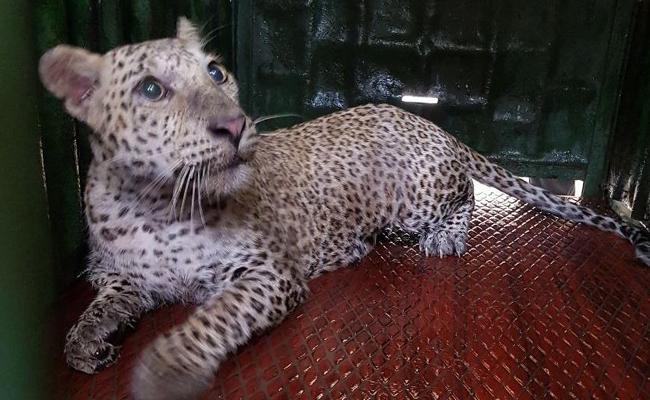 Leopard In CRPF Gym In Mumbai - Sakshi