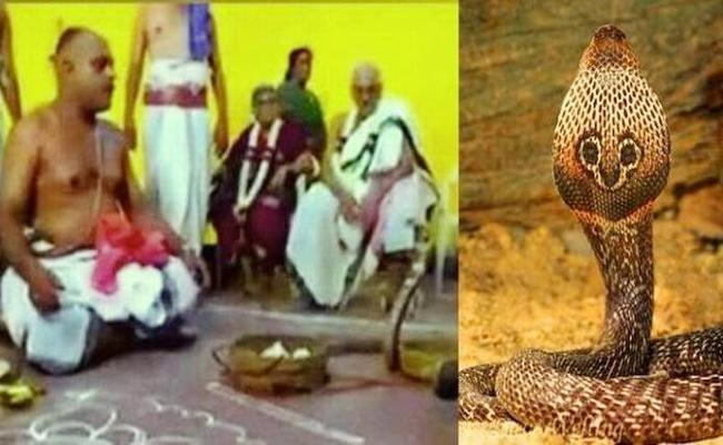 Worshiped To Snakes In Home Man Arrest - Sakshi
