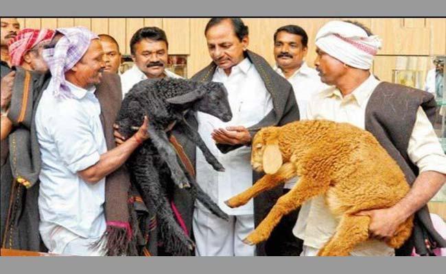 Fraud In Sheep Distribution - Sakshi