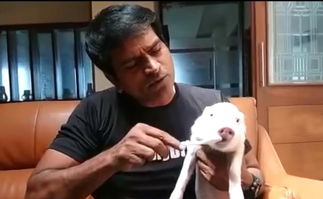 Ravi Babu Gets Piglet Ready For Shooting - Sakshi