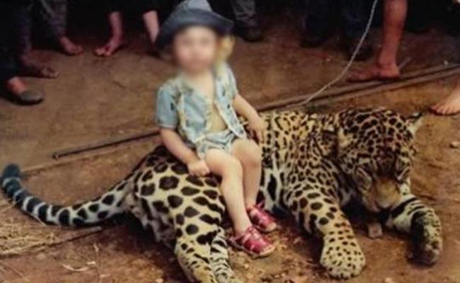 Leopard Kills Ranger Son in Uganda - Sakshi