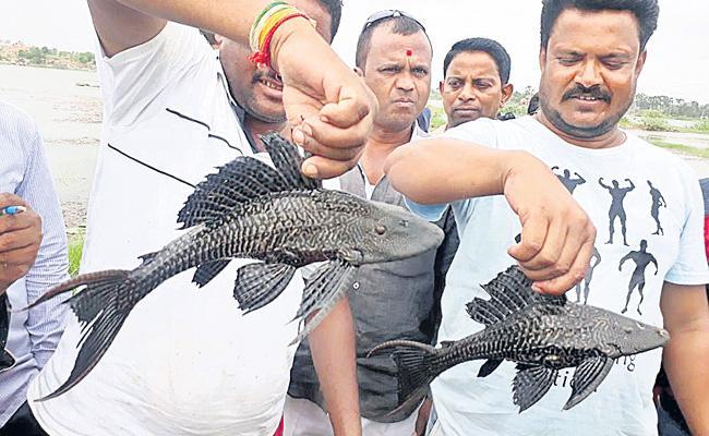 Rare Black Fish In Jalpally Lake Hyderabad - Sakshi