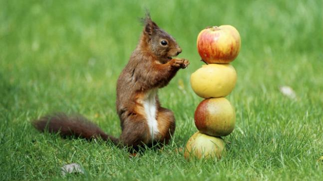 wax Coated Apples Haunting Consumers In Kolkata - Sakshi