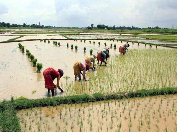 Farmer income doubled with krishi kalyan abhiyan - Sakshi