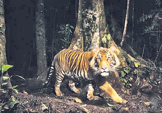 Animals that are accustomed to the night - Sakshi
