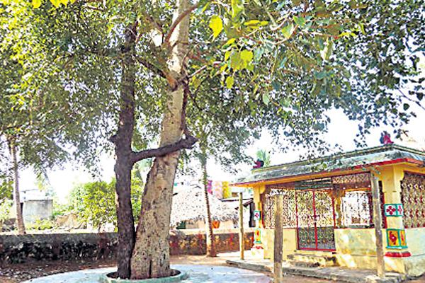 Neem tree importance in indian culture - Sakshi