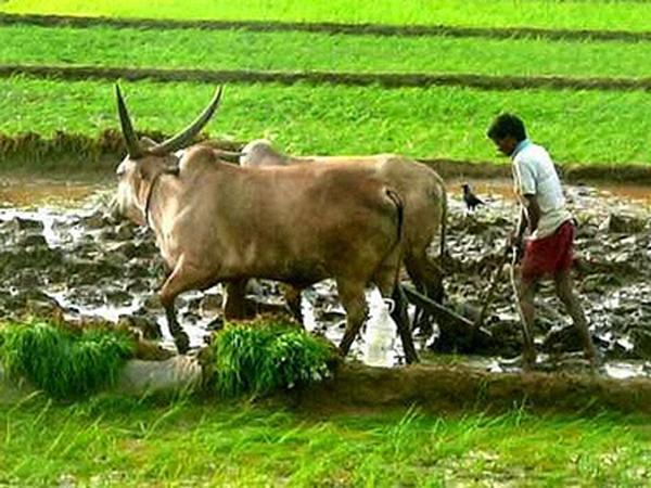 Tollfree number for Rythu Bheema - Sakshi