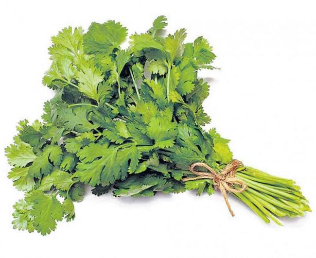 Coriander as a list of health benefits - Sakshi