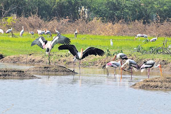 New life for artisans filled with pond - Sakshi