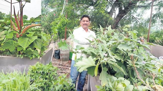 organic vegetable farming in home crops - Sakshi