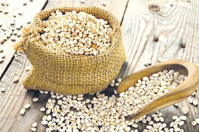 Many benefits to health with barley - Sakshi