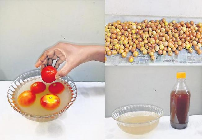 herbal Solution for tomatoes - Sakshi