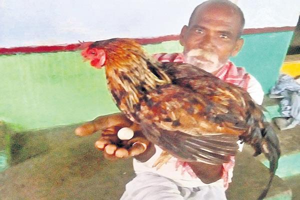 Cock layed egg - Sakshi