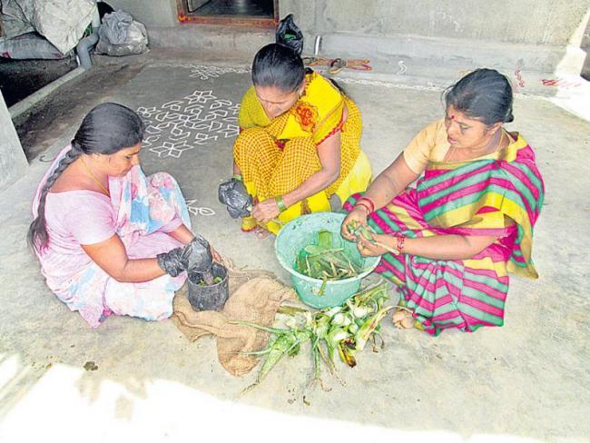 Aloe vera is good for crops - Sakshi
