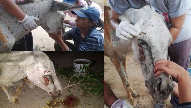 Political Workers Torture Donkey In Pakistan - Sakshi