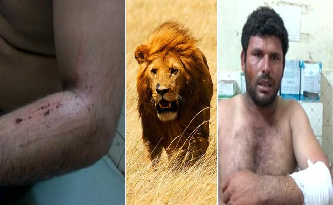 Brave Dog Saves man life from Three lions in Gujrath - Sakshi