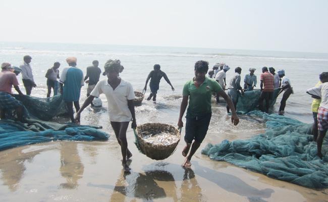 Fish Huntings In West Godavari - Sakshi