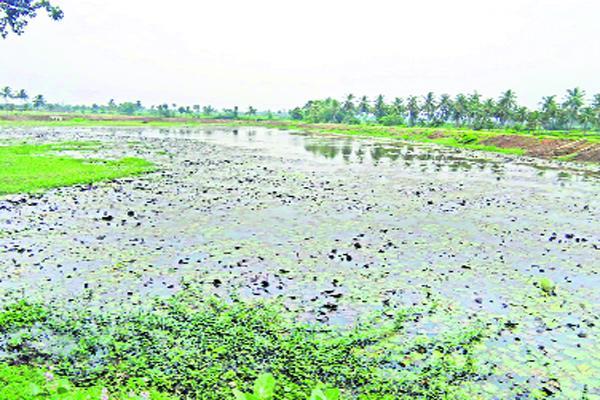 Irregularities in minister Achennayudu constituency - Sakshi