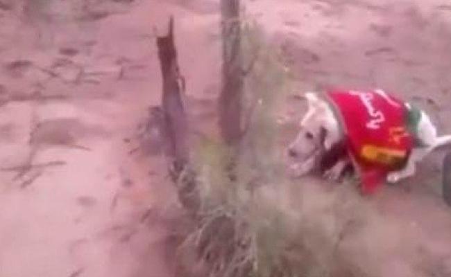 Dog Wrapped in PTI Flag Shot Dead - Sakshi