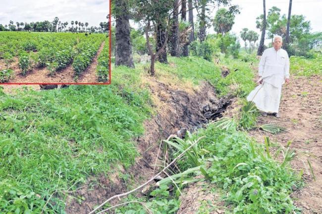 Green crops in dried lands! - Sakshi