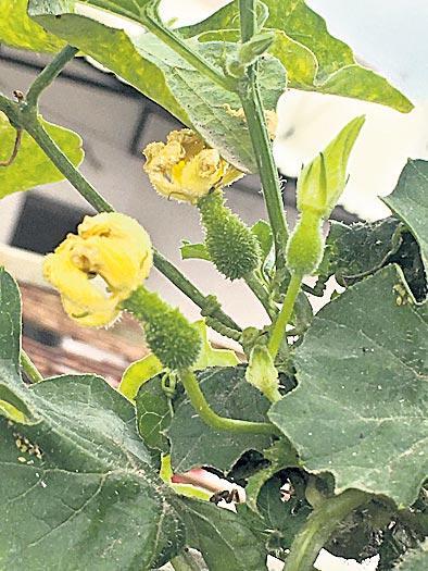 Houses for Vegetable home crops - Sakshi