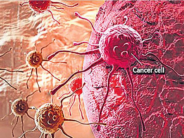 Michigan University Research On Cancer Stem Cell - Sakshi