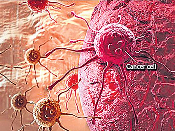 Michigan University Research On Cancer Stem Cell - Sakshi