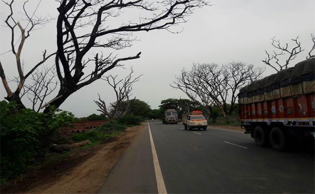 Dangerous dried trees In Khammam - Sakshi