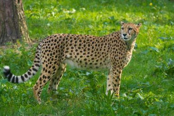 Diseases in Nehru Zoological Park  - Sakshi
