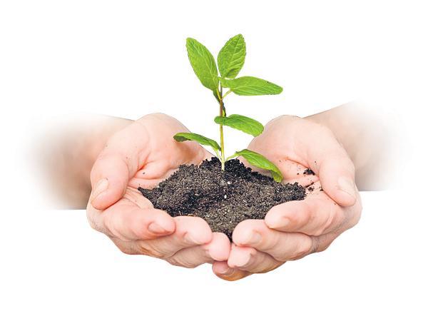 All world focus on Plantation - Sakshi